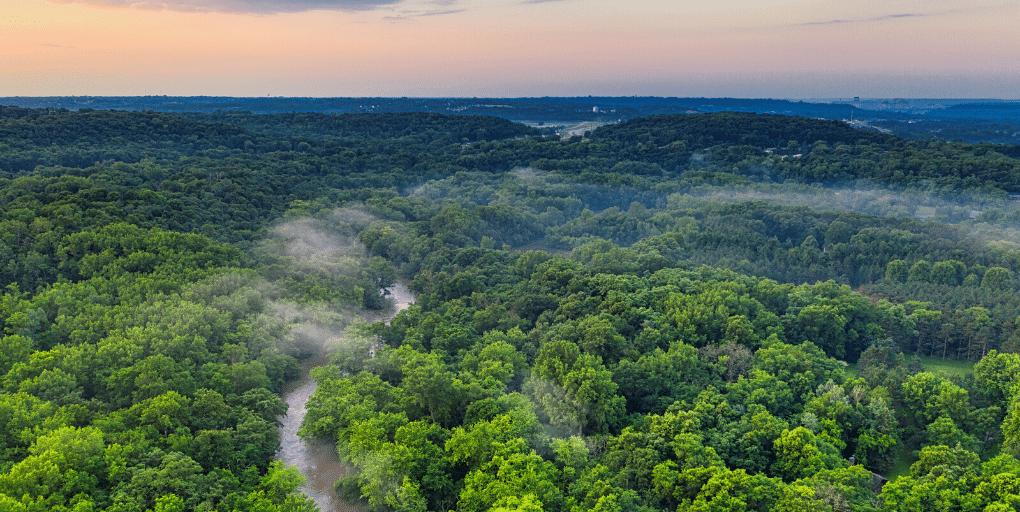 forêt vierge ONU