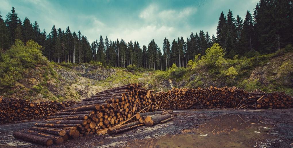 bois coupé déforestation