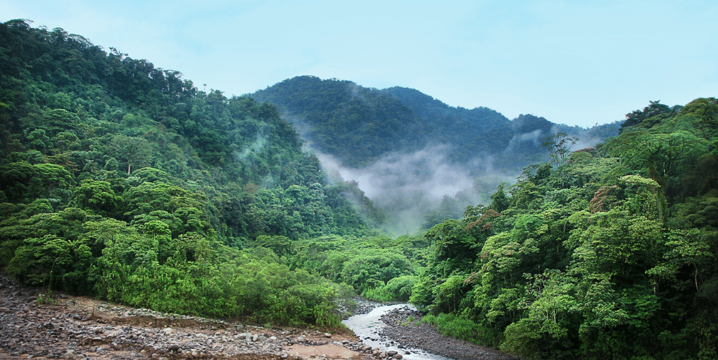 ODD ONU 15 forêts