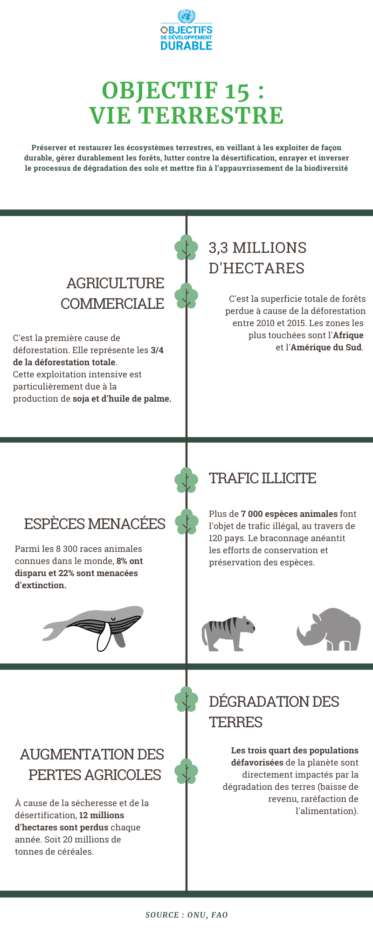 infographie vie terrestre ODD