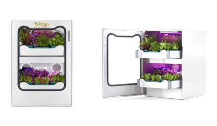 Pousse-légume, innovation borago