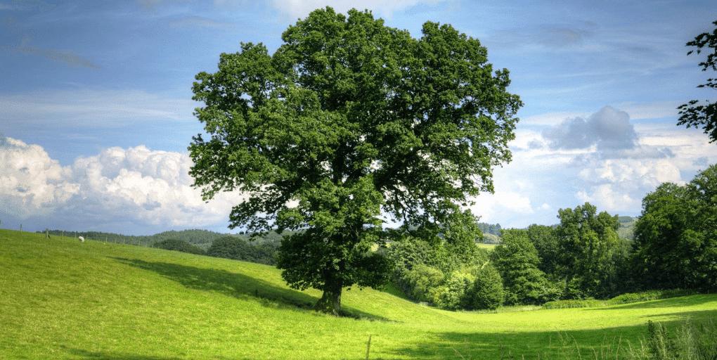 un arbre au milieu d'une prairie