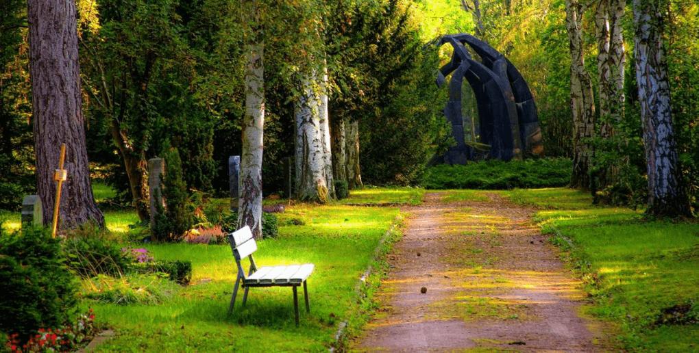 parc ville arbres