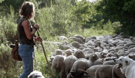 bergère et moutons