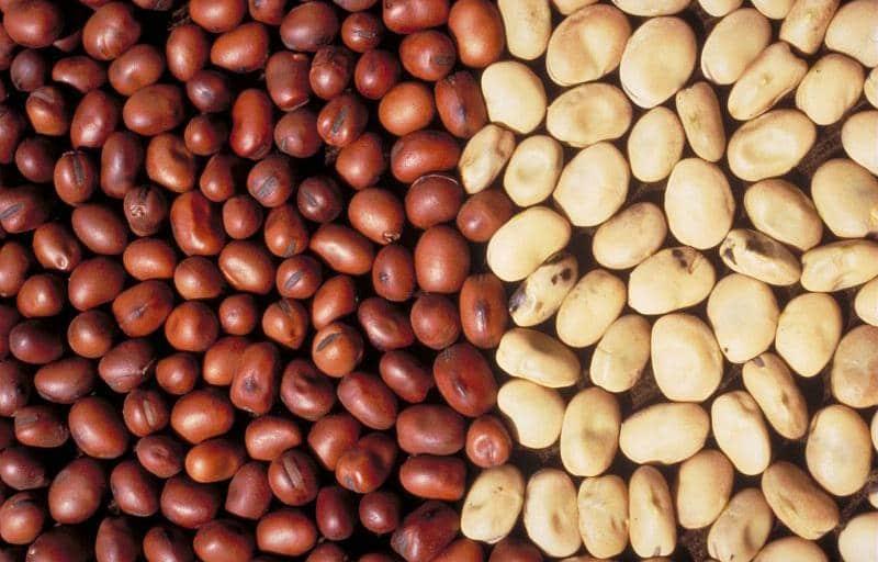 Inrae protéines végétales