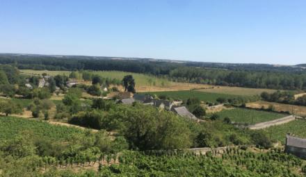 paysage vignoble agriculture