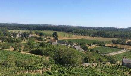 paysage vignoble agriculture