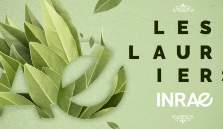 logo lauriers INRAE 2020