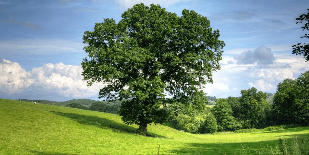 champ et arbre