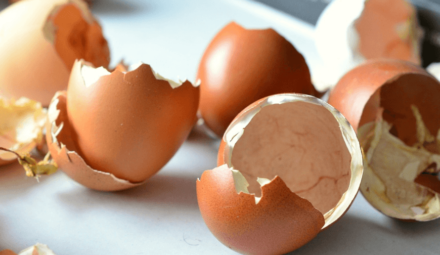 Circul'Egg recyclage coquilles oeufs
