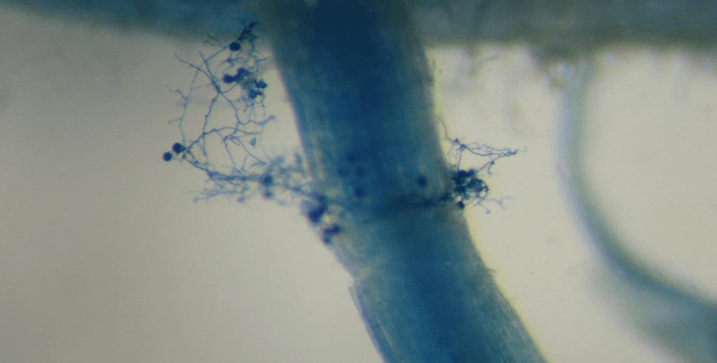 photo phénomène mycrohize