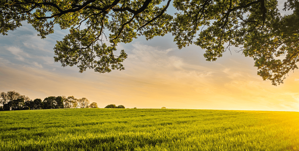 champs coucher de soleil