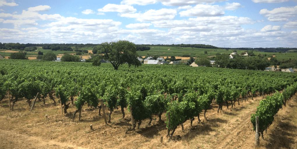 vignes en centre-val de loire