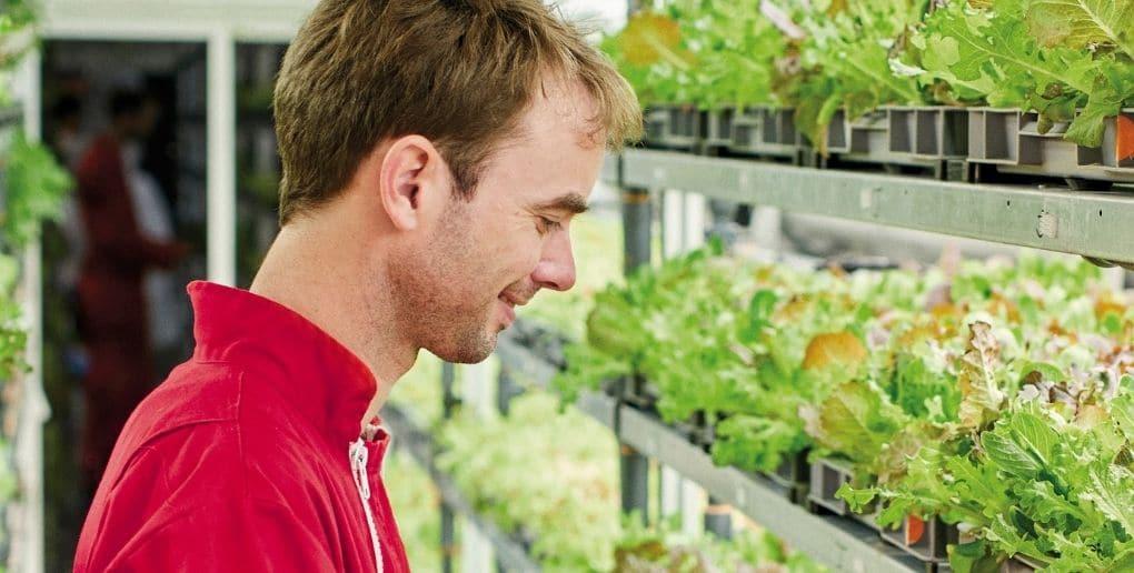 le fondateur d'agricool, Guillaume Fourdinier, dans un container où poussent des fraises