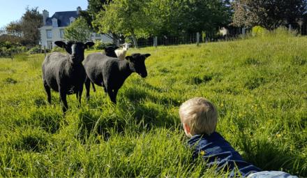 des moutons dans un champ