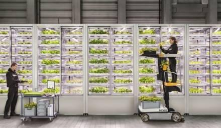 Infarm, leader mondial de l'indoor farming