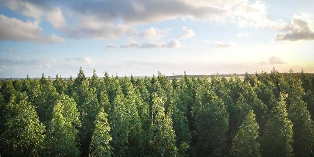 une forêt vue de haut